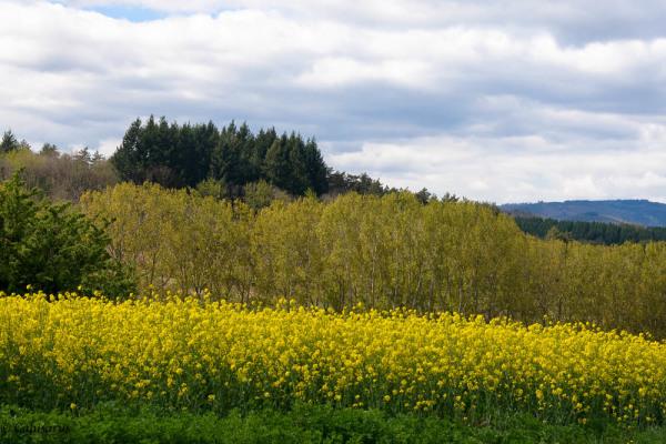 Paysage Ardèche Vernoux-en-Vivarais fleur arbre