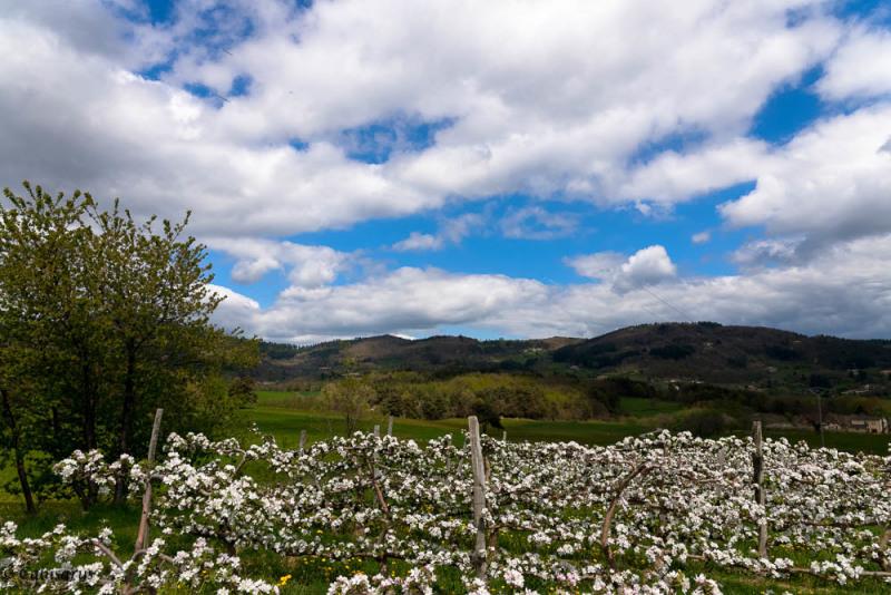 Paysage Ardèche Fleur nuages