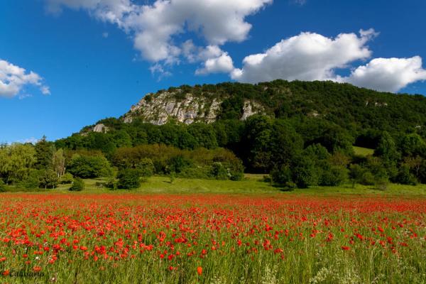 Paysage Drome 26 La-Baume-D'Hostun fleur montagne