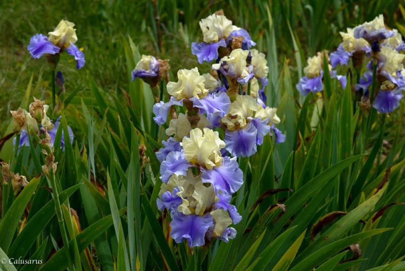 Chabeuil Drome 26 Fleur