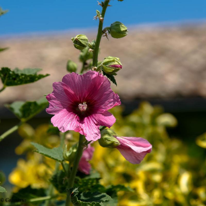 Nature Drome 26 fleur