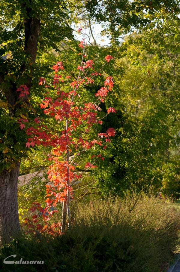 Automne plante nature Drome Larnage