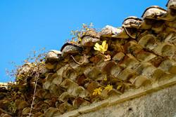Nature toit Gard Detail