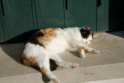 Animal portrait sommeil