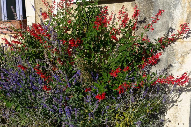 Fleurs Chabrillan Drome 26