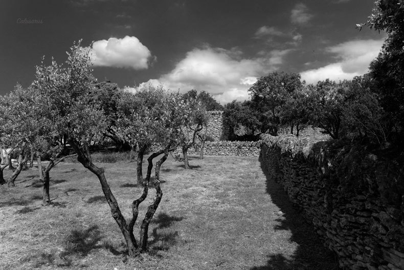 Nature Arbre N&B Luberon