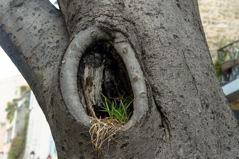 Nature arbre gros plan