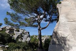 Bouches Du Rhone Baux Arbre Ombre