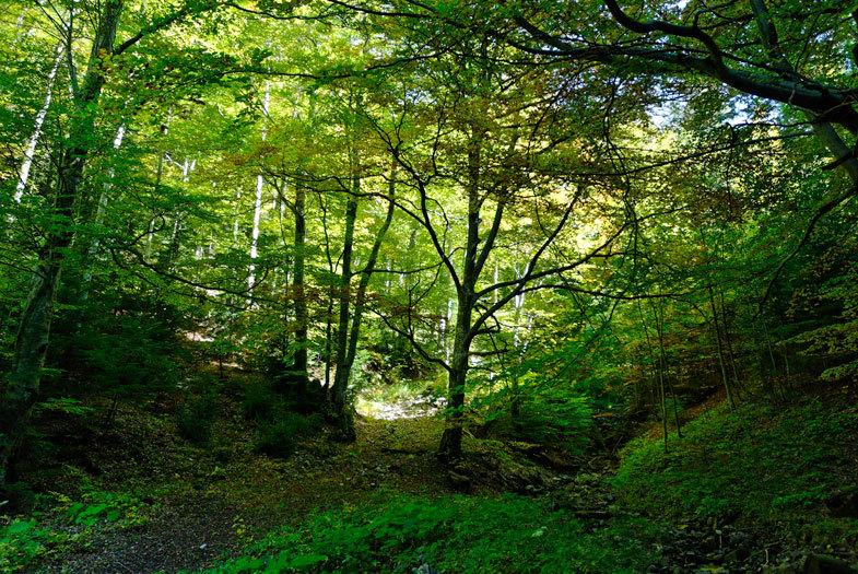 Nature Arbres Drome 26 Lus-La-Croix-Haute
