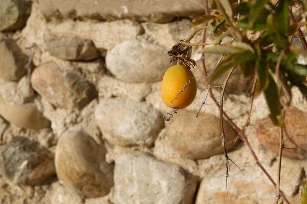 Drome 26 Fruit Mur