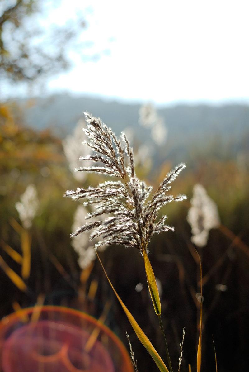 Nature Macro Plante