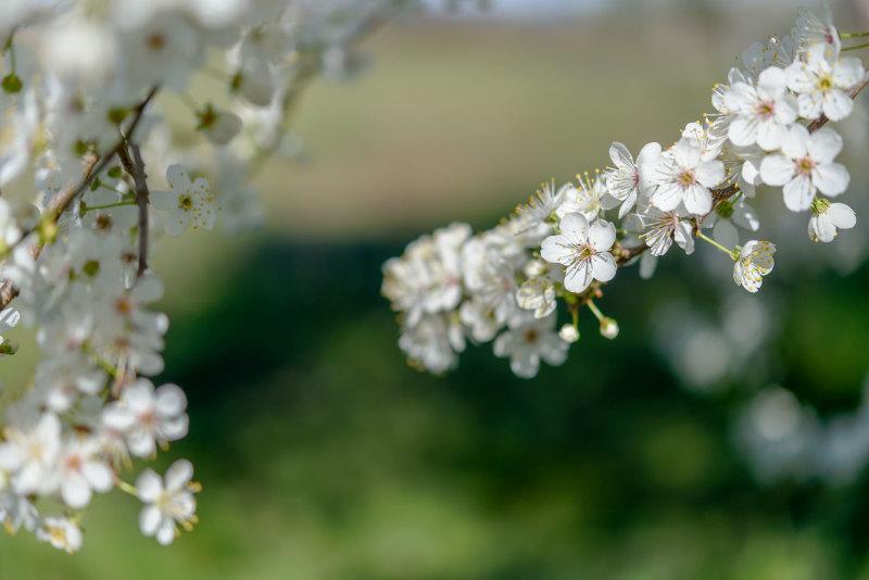 Pizançon Drome 26 Fleur Macro