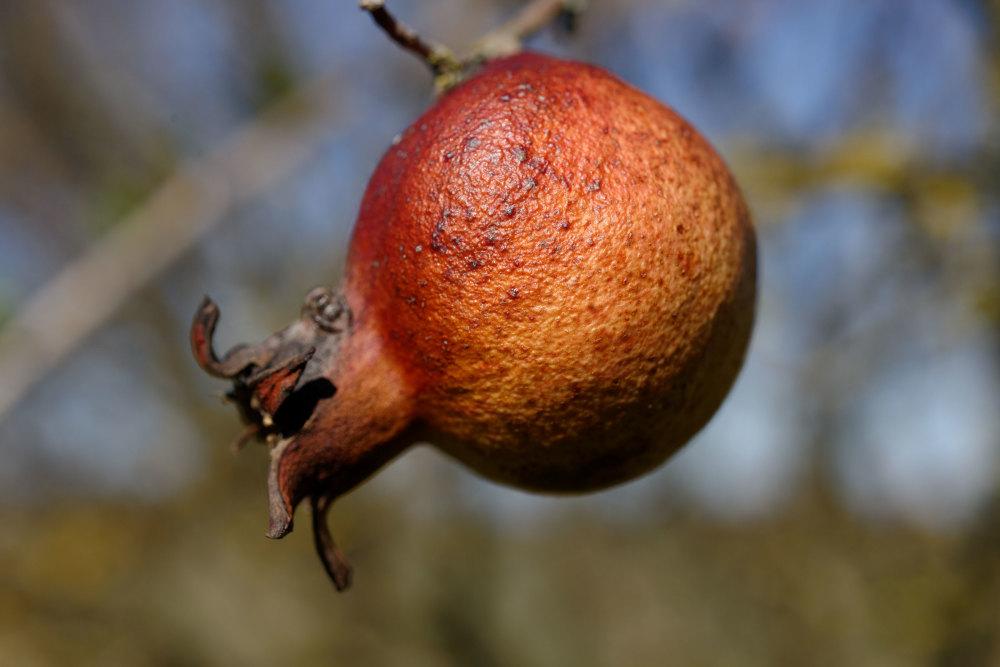 Drome 26 Pizançon Fruit Macro