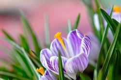 Drome 26 nature printemps fleurs