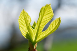 Drome 26 Pizançon Nature Plante Macro