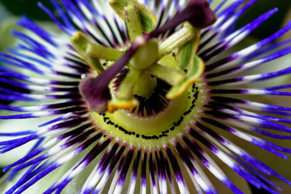 Drome 26 Pizancon Fleur Macro