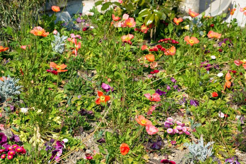 Fleurs Isere Bourgoin-Jallieu Couleurs