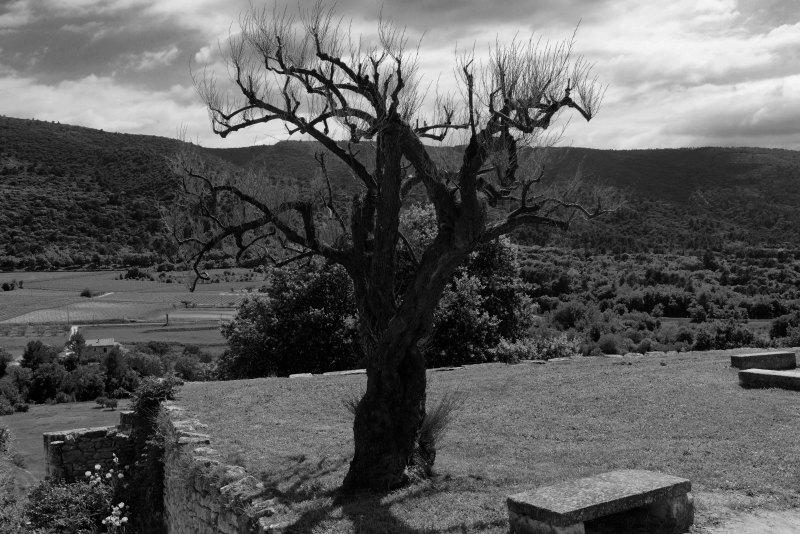 Paysage Landscape Nikon Arbres N&B B&W