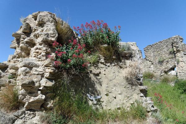 Fleurs Nature Ruine Vaucluse