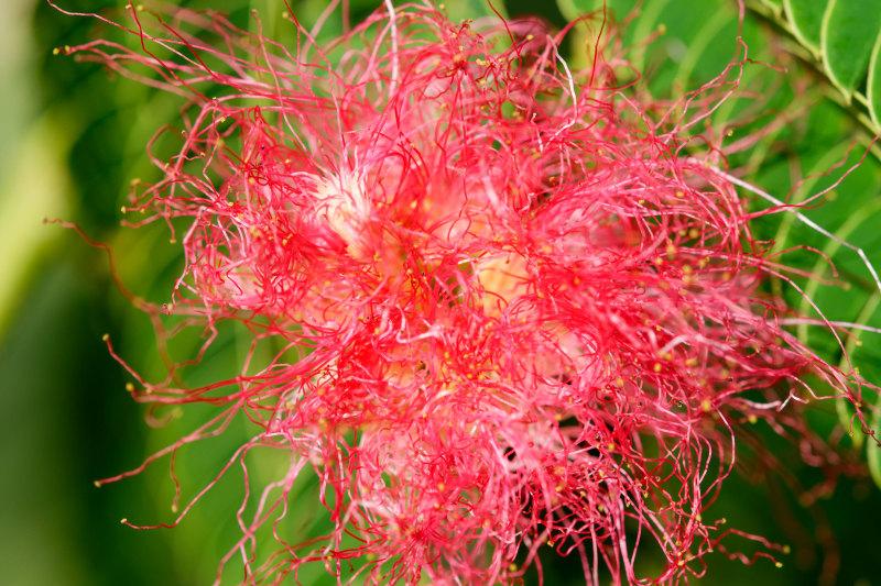 Drome 26 Pizançon Fleur Macro