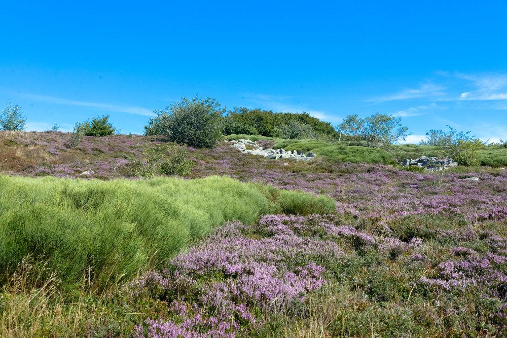 Paysage Fleurs Montagne Tarn
