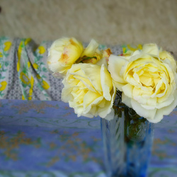Drome 26 Pizancon Rose Fleurs