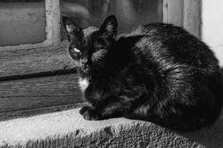 Chat Animal N&B Rhone