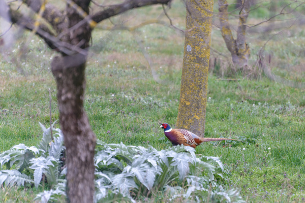 Drome 26 Pizancon Oiseau Animal