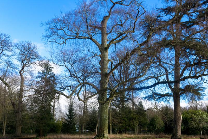 Arbres Nature Paysage Forêt Eure