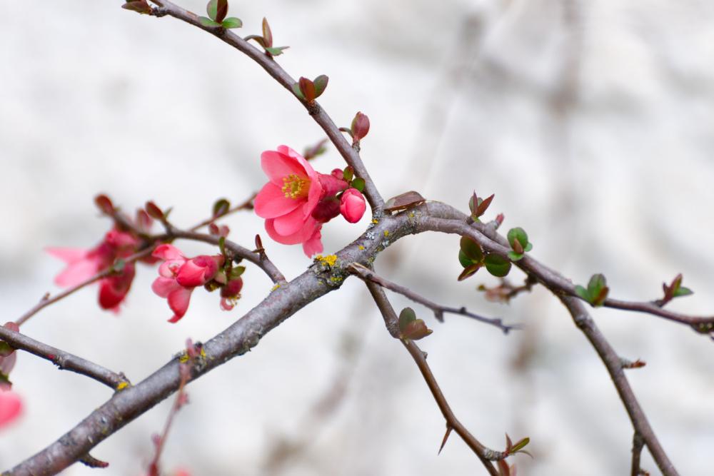 Fleurs Nature Drome 26