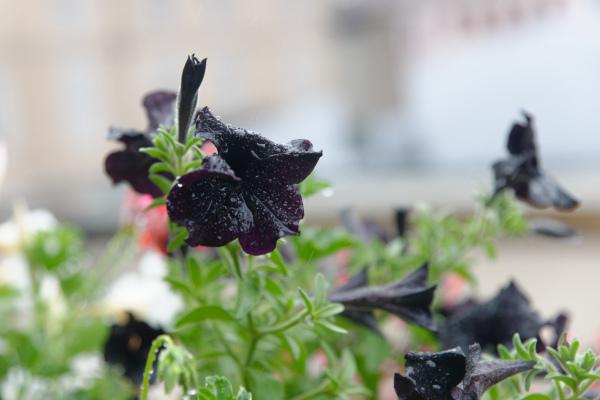 Fleurs nature baccarat
