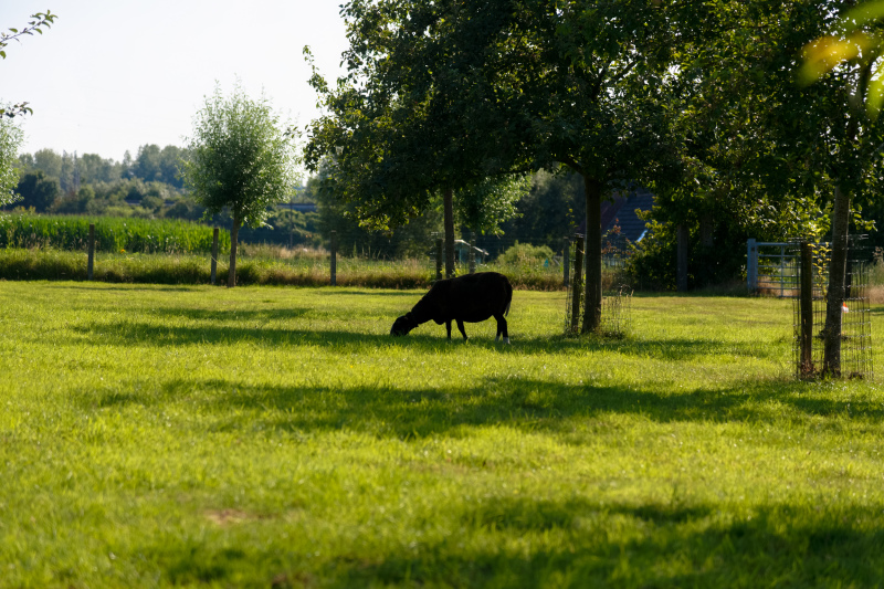 Belgique Paysage Nature animal