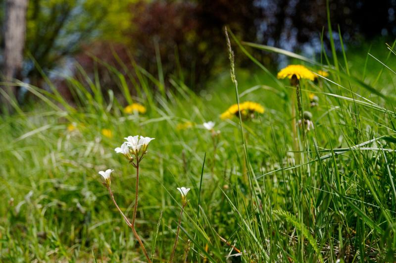 Fleurs gros plan Ardèche