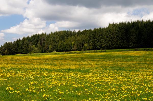 Fleurs gros plan Ardèche Nature