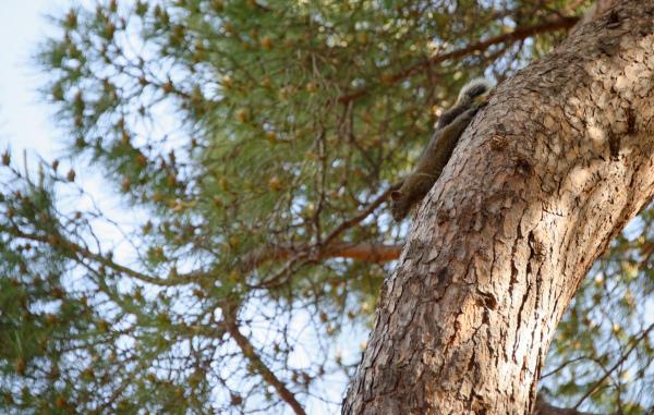 Ecureuil Nature Arbre Animal