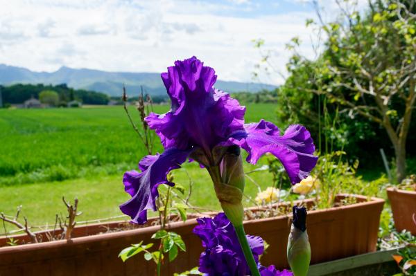 Drome 26 Fleurs Paysage