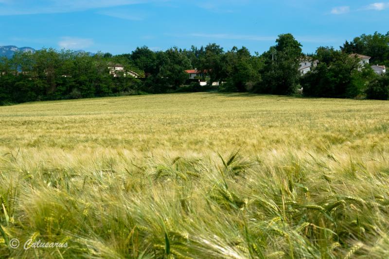 Drome 26 Pizancon Paysage Agriciulture