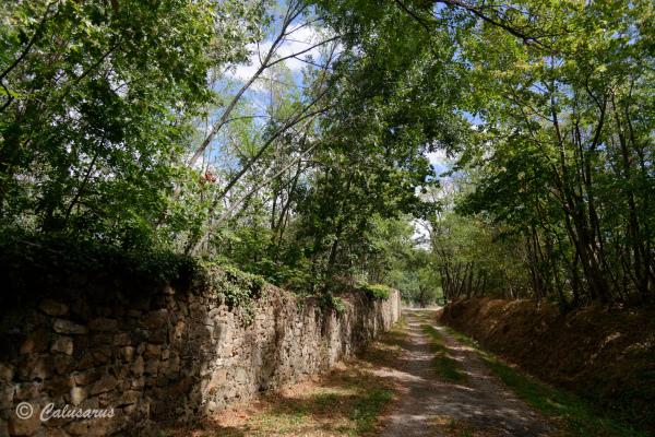 Ardeche Paysage Nature Chemin Arbre