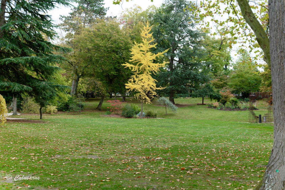 Eure Evreux Nature Arbre Tree Automne Autumn
