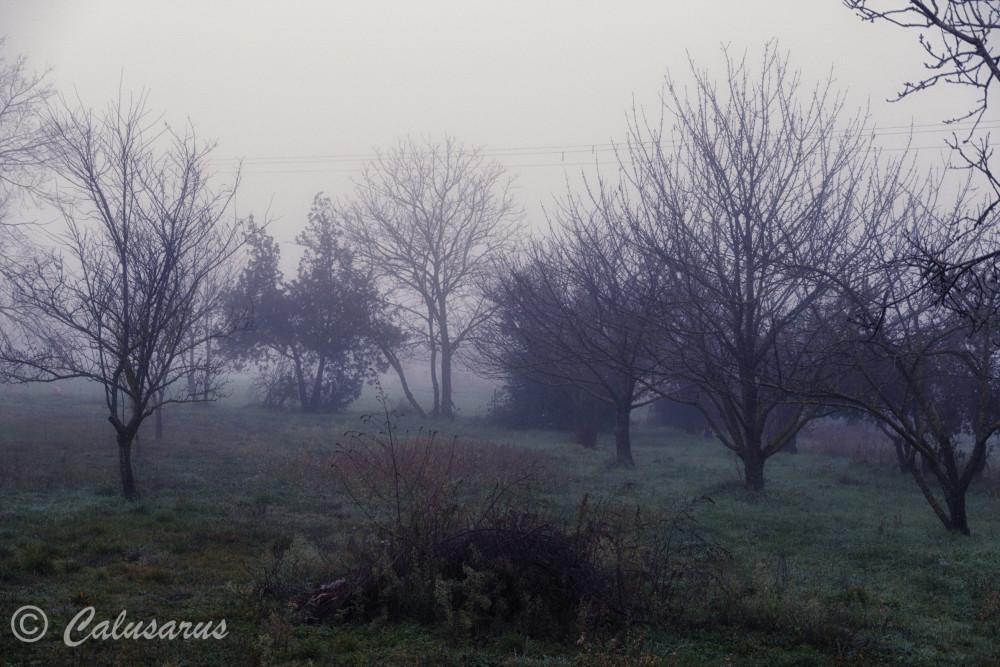 Drome 26 Paysage Hiver brouillard Nature Arbres