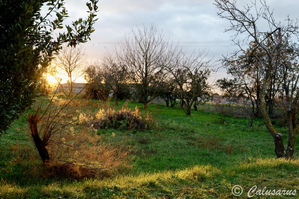 Drome 26 Paysage Hiver soleil Nature arbres