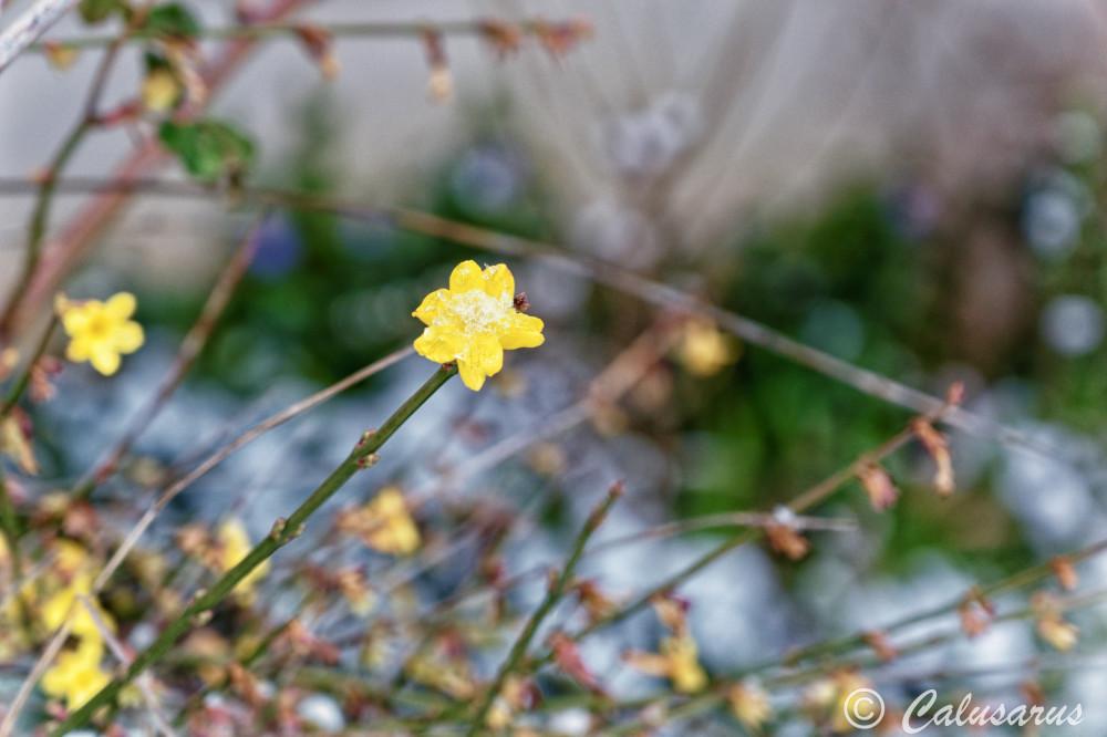Drome 26 Hiver fleur Neige Nature