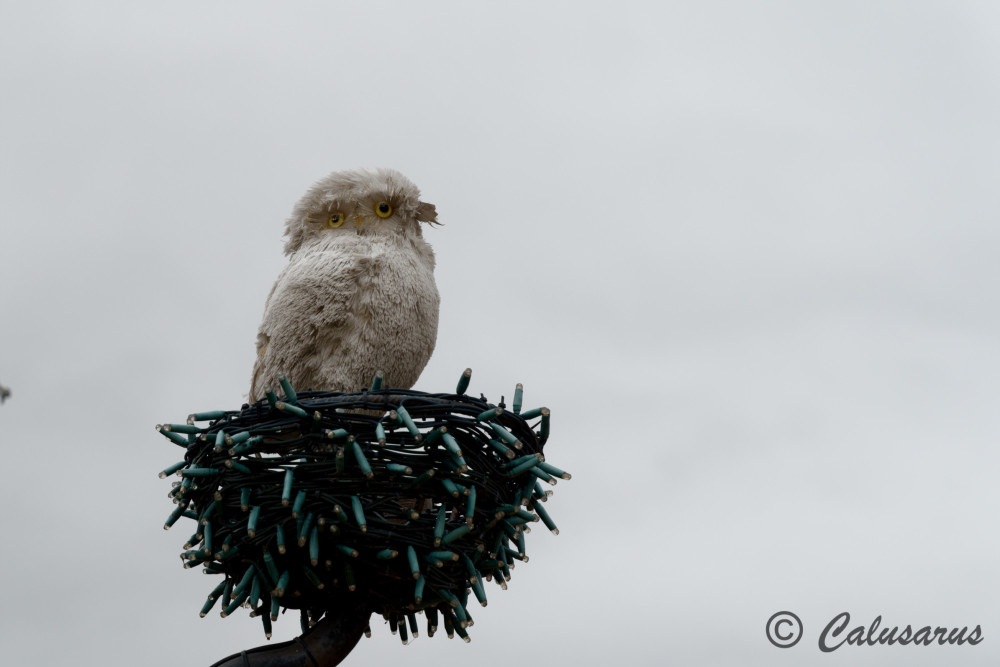 Drome 26 Hiver Tain-L'Hermitage oiseau