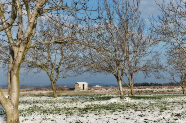 Drome 26 Besayes Paysage Arbres Nature hiver