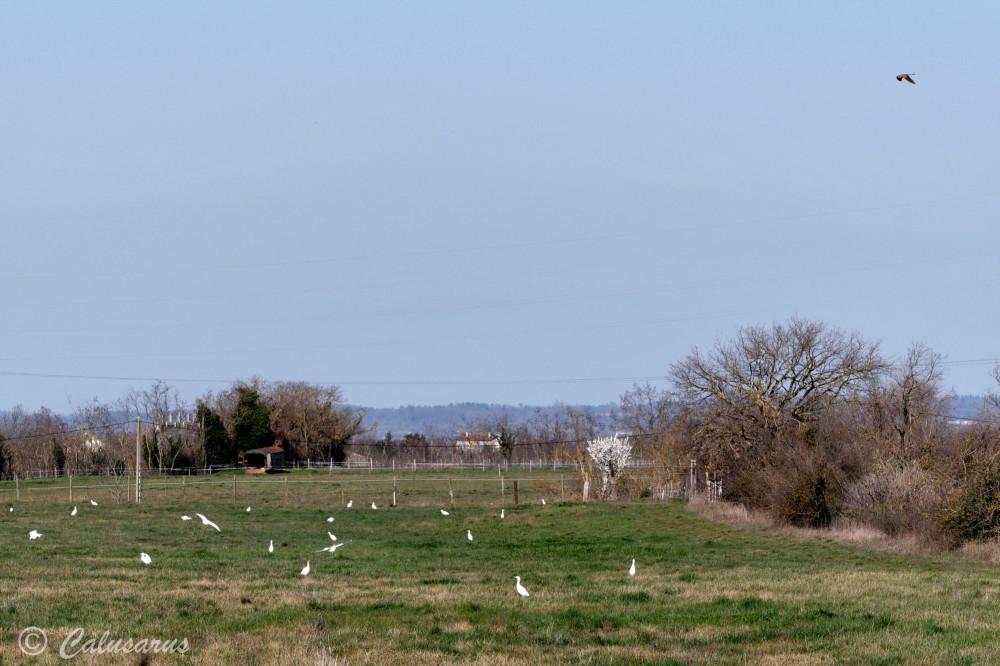 Paysage Drome 26 Chatuzange Oiseaux