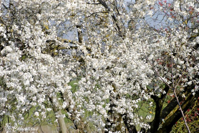 Drome 26 Chatuzange Nature Arbres Fleurs