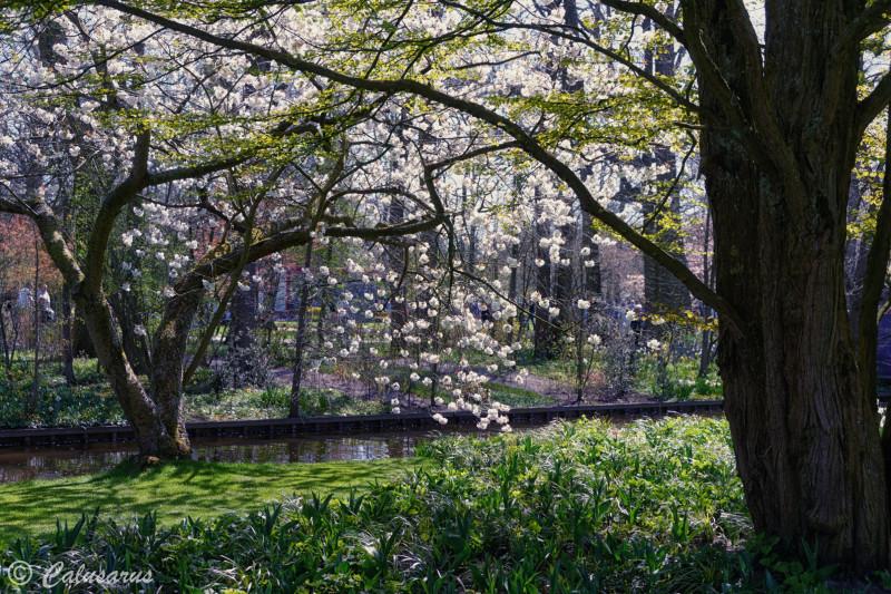 Fleurs printemps Keukenhof Arbres Nature