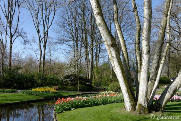 Paysage Fleurs Jardin riviere Printemps