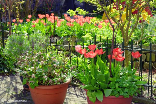 Amsterdam Plantes Nature Fleurs