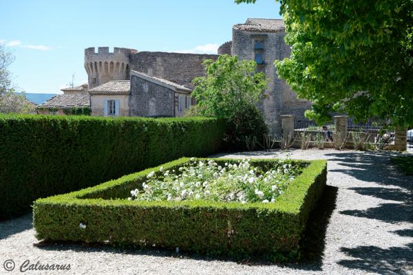 Paysage Gordes Village Vaucluse Fleurs